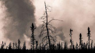 smoke billows up behind a row of trees