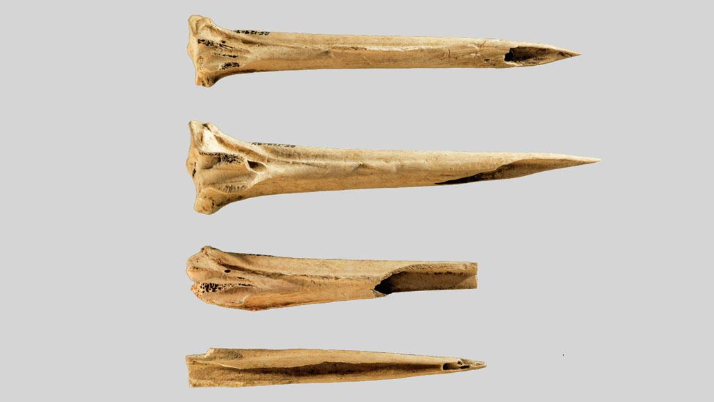 sharpened turkey leg bones used for tattoos