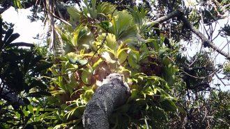fern colony on a tree trunk