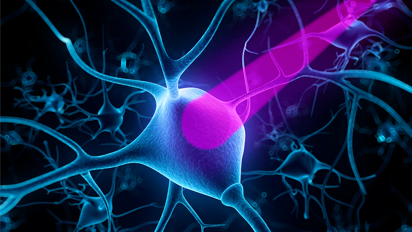 Controlling nerve cells with light opened new ways to study the brain
