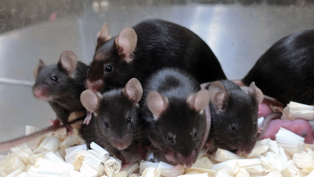 a group of mice that were exposed to space radiation