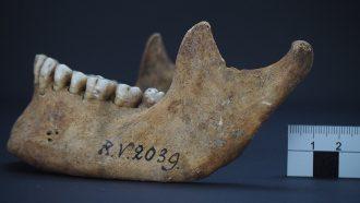 fossil of human jawbone