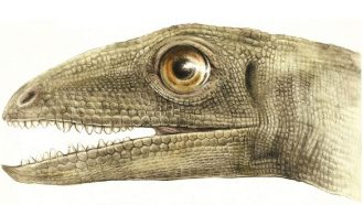 illustration of the head of an ancient insect-eating reptile