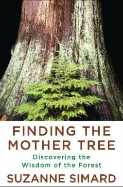 """cover of the book """"Finding the Mother Tree"""""""