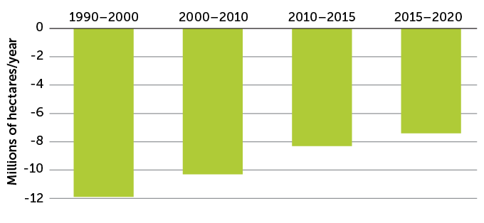 a graph showing that dustruction of natural forests continues, though at a slower and slower rate
