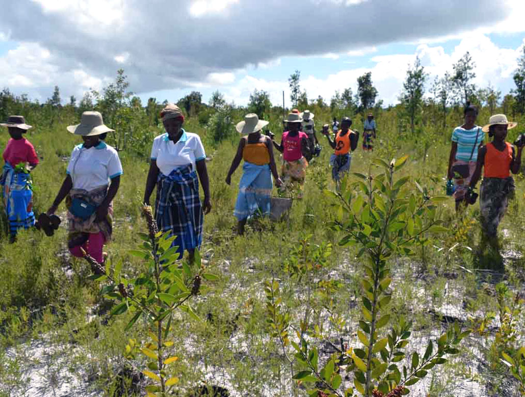 Protecting forests slows climate change more than mass-planting trees, Forma parte de la Vida
