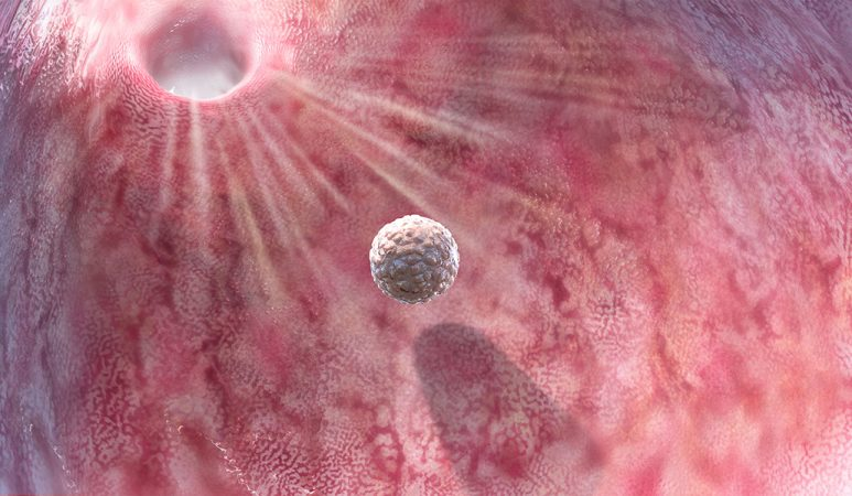 a ball of cells, the blastocyst, travels toward an opening in the upper left