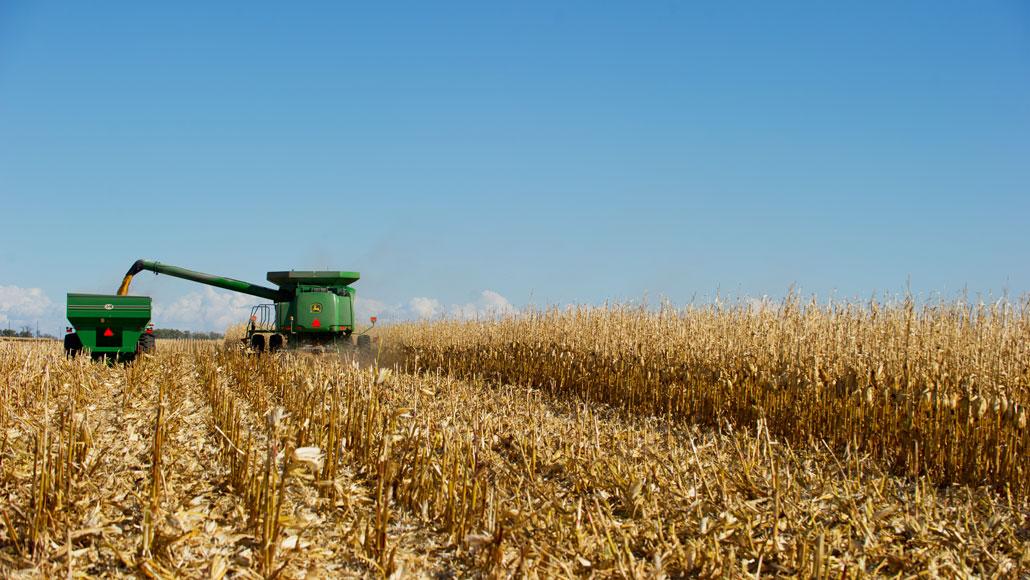 harvesting equipment in a cornfield