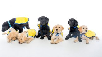 seven puppies wearing jackets