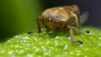 a small insect sitting on a leaf