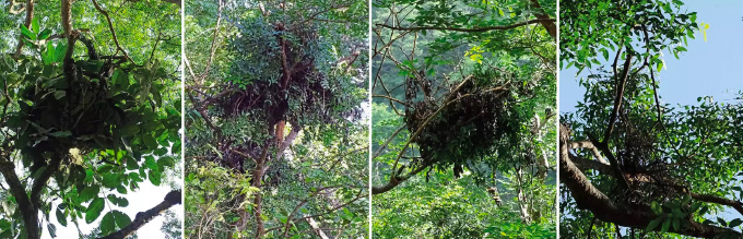 four images of nests up in trees