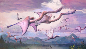 illustration of flamingo-like flying dinosaurs, with two in the foreground and several in the background