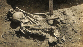 partially excavated skeleton of oldest known victim of a shark bite
