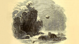 illustration of a polar bear standing on a cliff as a rock falls toward a walrus standing on a rock below