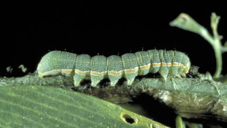 picture of a green caterpillar-like creature walking across a leaf