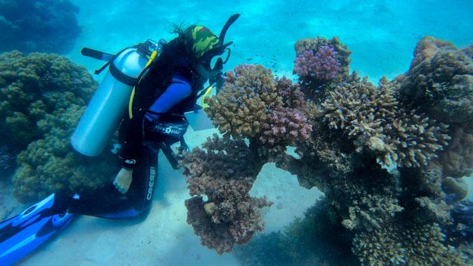 Raquel Peixoto scuba diving and collecting corals