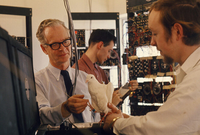 Psychologist B.F. Skinner examines a pigeon with another scientist