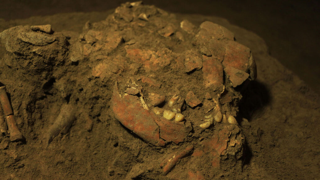 skull bones from an ancient Indonesian woman