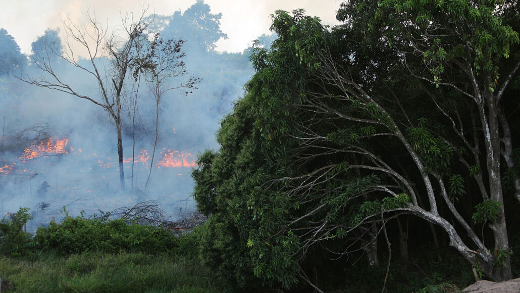 flames and smoke billow from trees in the Amazon