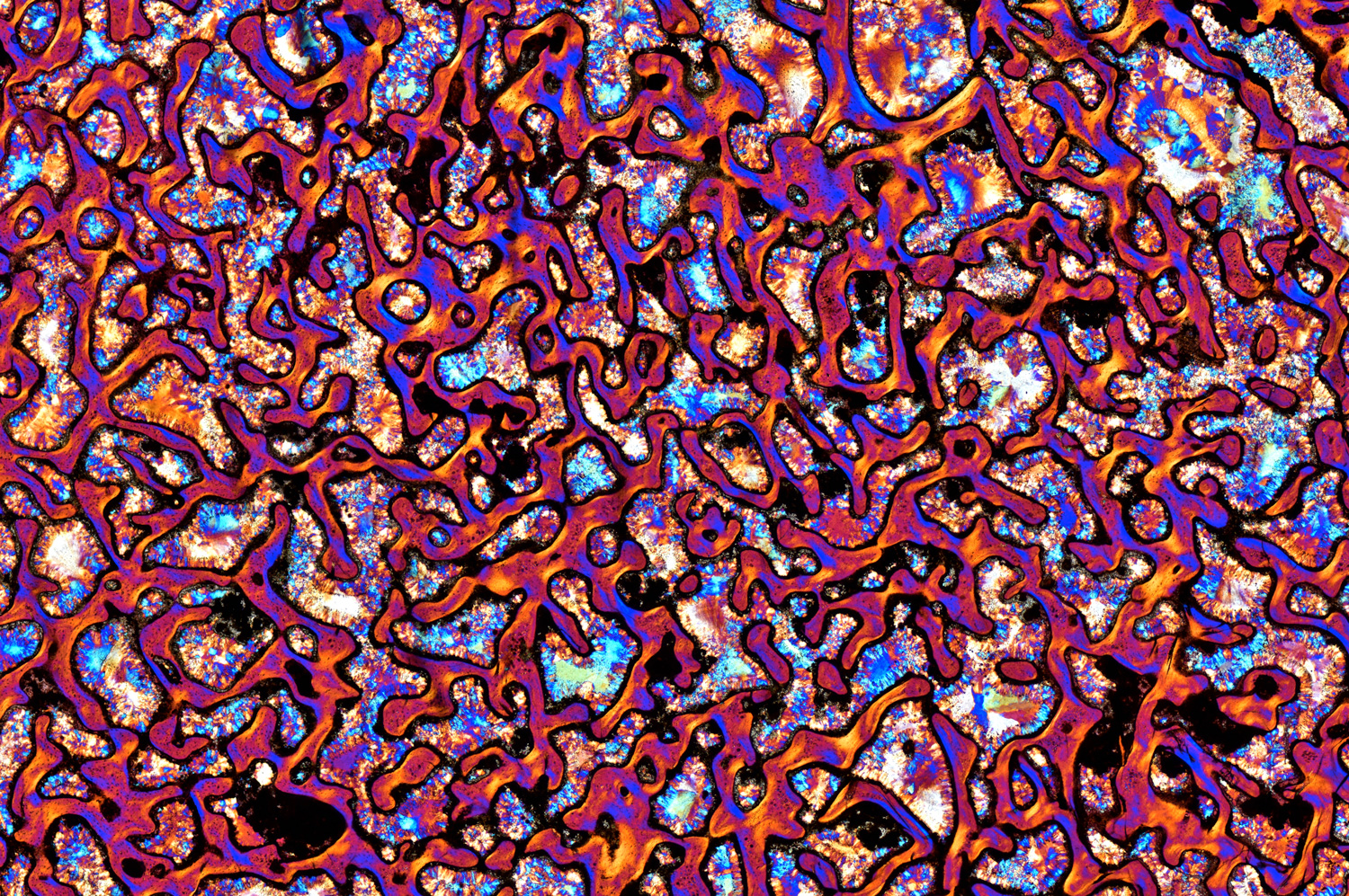 a magnified slice of dinosaur bone in vibrant colors