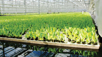 plants in boxes in a large greenhouse
