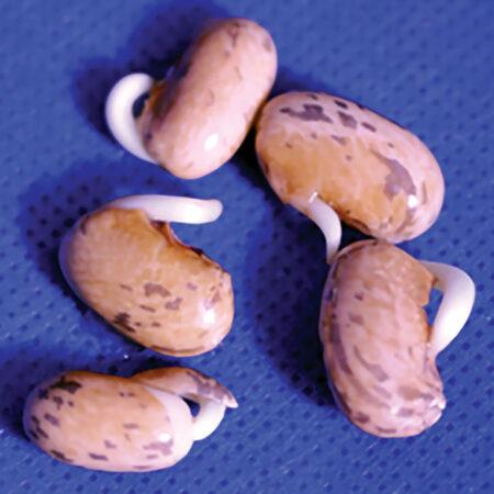 image of untreated seedlings