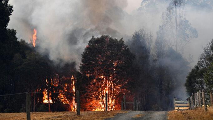 smoke billow from burning trees