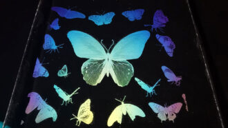 images of butterflies created with transparent ink