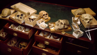 skulls and other fossils in drawers