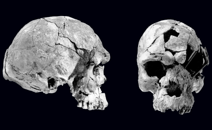 front and side view of skull discovered in Herto, Ethiopia