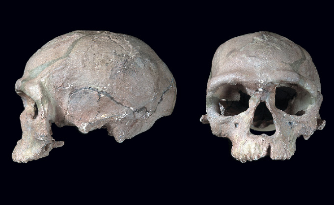 front and side view of skull discovered at Jebel Irhoud