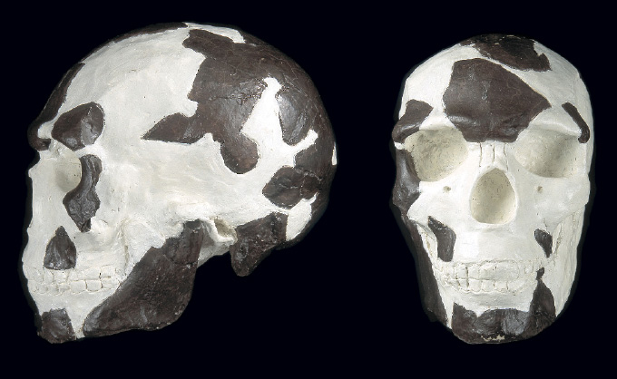front and dise view of skull discovered at Omo Kibish