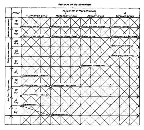 Weidenreich trellis diagram historic