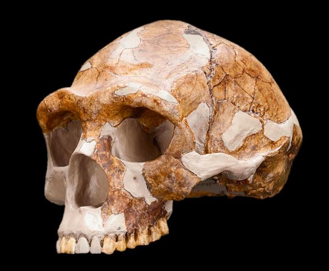 Chinese Homo erectus