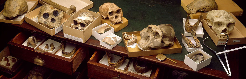 Skulls in boxes