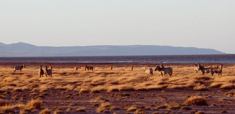 East Turkana Pic
