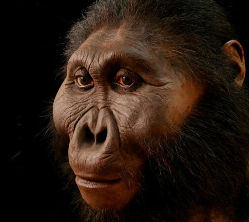Reconstruction of an ancient hominin that looks very ape-like