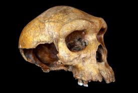 Kabwe skull pic