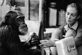 Goodall and a chimp