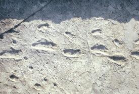 Footprints Laetoli