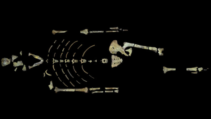 the bones of the famous skeleton Lucy arranged on a black background