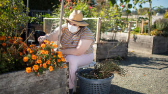 woman wearing face mask and hat tending to flowers in garden