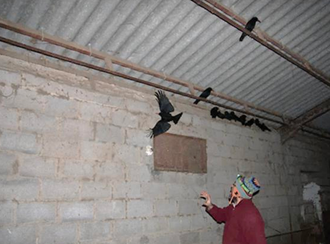 a person inside a building attempting to catch a bird