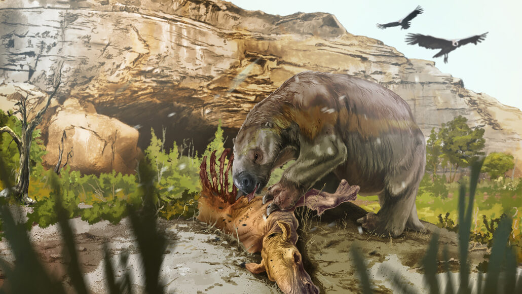 an illustration of a giant ground sloth eating from a mammal carcass in front of a cave