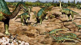 illustration of nine dinosaurs of differing ages